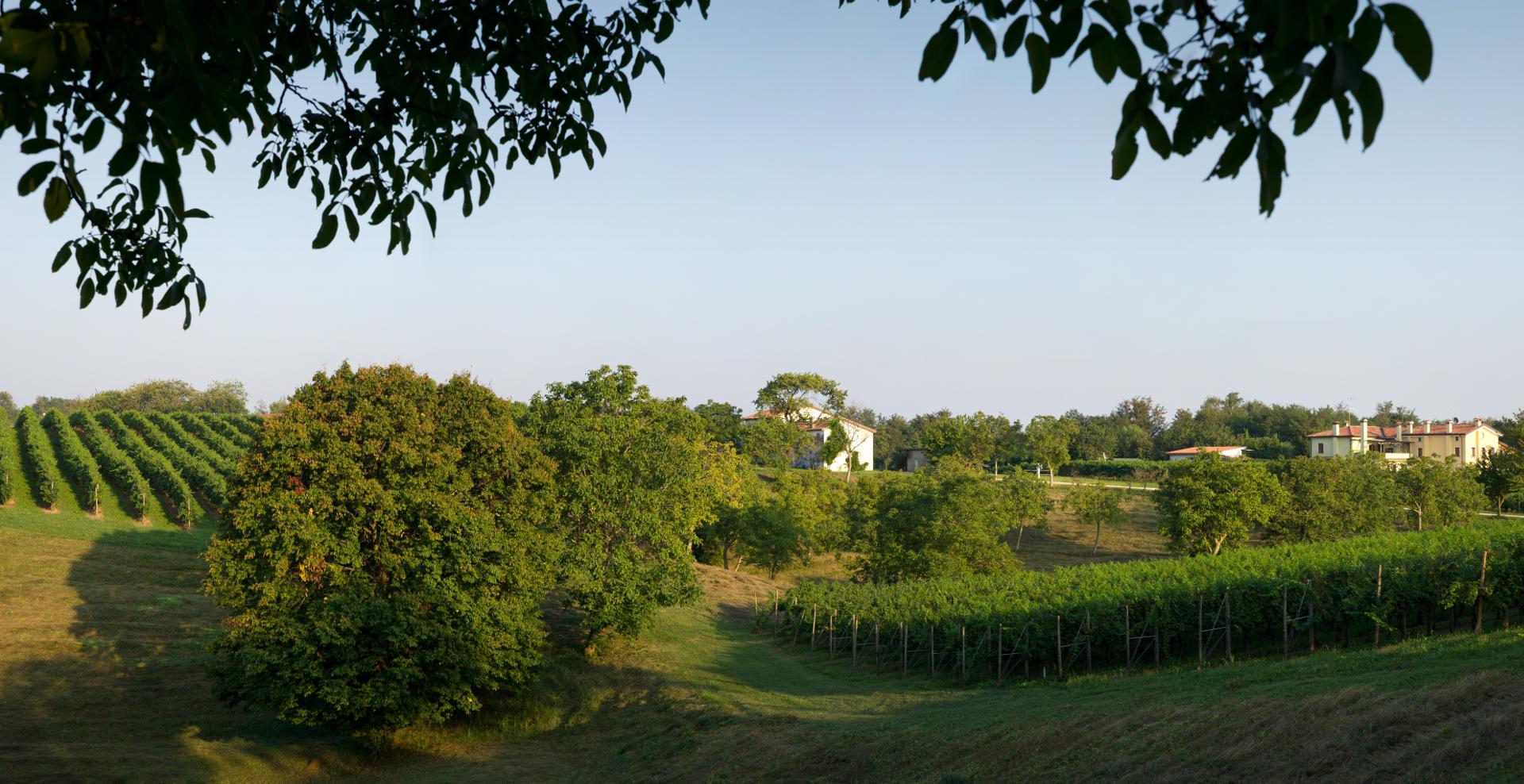 Montelvini porta a Verona i cento orizzonti dell'Asolo Prosecco Superiore docg